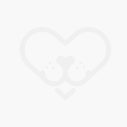 chapita identificativa para perro, bulldog frances blanco y negro.