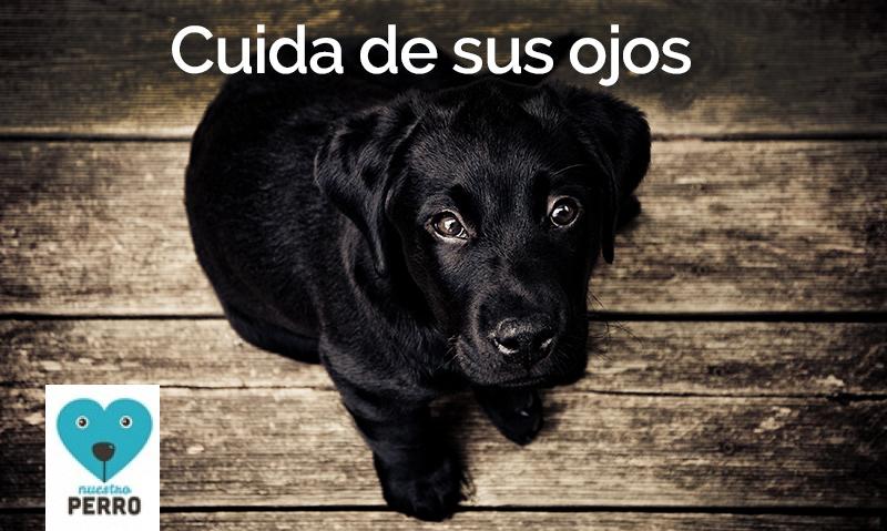 Cuida de los ojos de tu perro
